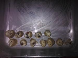 Disporre le roselline nella teglia